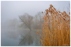 Roseaux dans la brume (Pascale_seg) Tags: landscape paysage river riverscape étang matin aube aurore brouillard morning mist misty winter hiver froid cold calm quiet moselle lorraine france nikon tree reflet reflection roseaux orange bleu blue gris grey
