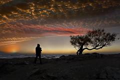 Livorno (Zz manipulation) Tags: art ambrosioni acqua autunno arancio alberi albero sea spiaggia sole sera livorno tramonto