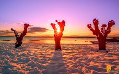 Sunset (pramodphotography7) Tags: sunset sunrise snow winter trees bygdøy oslo norway water sea ocean riverfjord oslofjord sky cloud colors