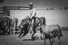 20050703_185 (dc2photo) Tags: ncha ocha ontario cowboy cutting equine horse qh quater sport western