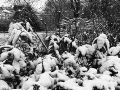 IMG_2660 (Juan Valentin, Images) Tags: jardinduluxembourg sénat palaisduluxembourg paris france winter invierno hiver snow neige nieve juanvalentin palais palacio park parque parc jardin garden whiteandblack blancoynegro biancoenero noiretblanc