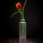 Tulip Stretch thumbnail