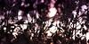 La Fata Nascosta (W@nderluster) Tags: bosco wood canon eos fata fairy bokeh deptoffield italy italia violet viola spring primavera