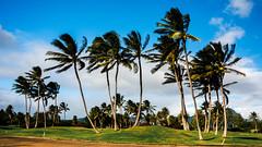 Hawaii USA - Kauai Island.  Spirit of Kaua'i (Feridun F. Alkaya) Tags: usa hawaiiislands hawaii kauaiisland wailuafalls kauaisspirit forest waimeacanyonstatepark waimea waimeacanyon hawaiiisland ngc landscape canyon road kauaı grass soil aloha