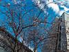 24.03.2018 Frühling in der Stadt (FotoTrenz NRW) Tags: frühling duisburgcity spring tree blüten blauerhimmel wolken stadt urban nature märz gebäude trees blooming duisburg nrw