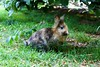 bunny (꧁greis꧂) Tags: parco bucci faenza