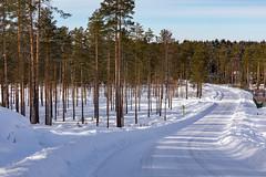 Ähtäri Zoo, Finland (Ninara) Tags: ähtäri ähtärizoo winter wildanimal animal zoo talvi road forest