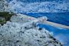 Foto-20180228-115547-JWmWM-70 (jacobwaterweg) Tags: ijs koud vorst ice cold frost frozen bevroren