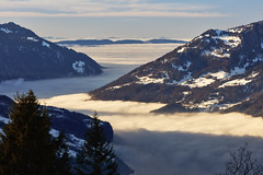 Sea of fog (Thomas Mülchi) Tags: 2017 ch cantonofstgallen flumserberg landscape maschgenkamm mountain mountains switzerland clear clearsky clouds cloudy seaoffog sky snow snowy sunny tree trees winter zürcheroberland quarten sanktgallen