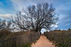 Path (Karol ...) Tags: path pathway passage tree texure sand fence sky cloudy