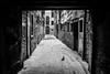 Lonely bird in Venice (Roberto Bendini) Tags: lone pidgeon bird ghetto venice venezia italia