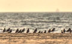 beach birds (karlitoz ricardoz) Tags: sony alpha nex nex6 a6000 55 210