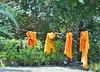 Colour of the day. (France-♥) Tags: 878 four laundry lessive cordeàlinge thailande vêtements clothing robe quatre chiangmai thailand saffron