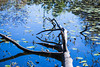 Turtle Pond (adaliphoto) Tags: nikond3400 nikon d3400 houston htown texas home my city downtown uptown bigcity usa america american explore exploring homesweethome beautiful love amazing mytown turtlepond pond lake river turtles trees branches grass algae sunny spring summer warm sun clearskies arboretum nature escape wildlife water