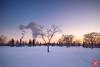 Evening at a park 25 (Kasia Sokulska (KasiaBasic)) Tags: canada alberta edmonton river valley rundle park winter evening blue hour landscape nature
