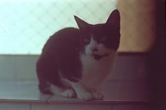 Piano (a.ninguem) Tags: zenit df300 kodak film 35mm cats katze neko failing camera analog filme