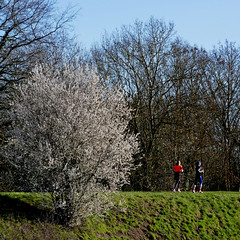 Levée de l'Authion, les Ponts-de-Cé (pom.angers) Tags: labellepoule lespontsdecé angers 49 maineetloire paysdelaloire france europeanunion march 2018 panasonicdmctz101 anjou angersloiremétropole jogging running women people flowers trees sorges lafossedesorges authion 100 200