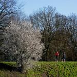 Levée de l'Authion, les Ponts-de-Cé thumbnail