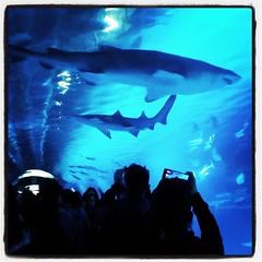 sharks (Maluni) Tags: valencia spagna espana spain acquario water acqua acquarium waterpark park sharks squalo squali