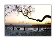 Coucher de soleil sur la Neva / St. Petersbourg 1978 (PtiteArvine) Tags: 1978 urss russie stpetersbourg leningrad neva arbre hiver gel coucherdesoleil sunset froid film