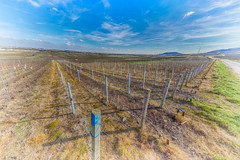 Vignes (sebastienloppin) Tags: vigne raison raisin wine bluesky spring hdr hdri efex canon sigma1224f4 sigma 6dmarkii