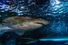 DSC_7807 (martindragon13) Tags: nswaustrailia sydney sydneyaquarium