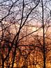 Pretty tangle (EvelienNL) Tags: sunset zonsondergang evening avond sky silhouet silhouette trees branches twigs pastel orange peach pink texture lucht avondlucht bomen takken takjes textuur