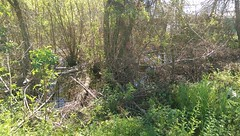 swamp next to drain (eustatic) Tags: grn