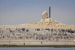 070A3503 (Cog2012) Tags: qatar
