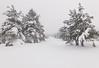 Slivnica (happy.apple) Tags: cerknica slovenia si slovenija slivnica winter snow sneg zima notranjska snowstorm geotagged