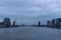 Rotterdam landscape