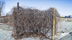 Bramble (Sue90ca Hoping For Time To Catch Up Soon) Tags: canon 6d lakeerieandarea bramble