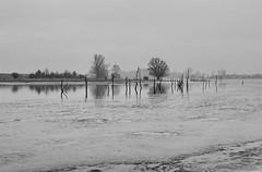 Landschaft (Wunderlich, Olga) Tags: wasser bäume spiegelung natur nebel dunst eis winter landschaft rügen insel deu mecklenburgvorpommern