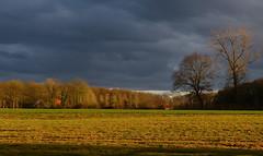 In the light of the setting sun (joeke pieters) Tags: 1380761 panasonicdmcfz150 woold winterswijk achterhoek gelderland nederland netherlands holland landschap landscape landschaft paysage licht light lucht sky wolken clouds