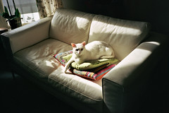 (michel nguie) Tags: michelnguie chasinglight film analog cat couch roubaix rbx window