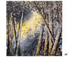 Daïa expo Porcheville DSCF1226 (mich53 - thank you for your comments and 5M view) Tags: exposition evénement arts artistes xt2 îledefrance porcheville xf1655mmf28rlmwr fujifilm daia arbres forêt