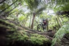 Flynn Stage One (Jeremy J Saunders) Tags: crankworx redwood forest whakarewarewa sport race enduro newzealand rotorua mountainbike bike mtb jeremyjsaunders jjs nikon