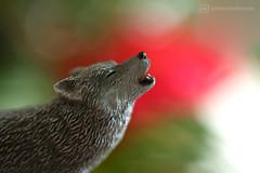 little red (photos4dreams) Tags: onceuponatime macromondays macro makro photos4dreams p4d photos4dreamz wolf lupus ghost gameofthrones white weis geist bw sw schwarzweiss black schwarz weiss