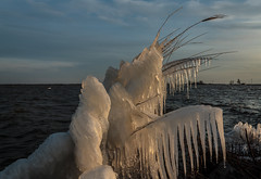 Nature art (Marco van Beek) Tags: europe holland reed frozen water sky landscape seascape cold nature winter art