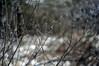 catkin (Frau Koriander) Tags: weidenkätzchen salix weide kätzchen spring frühling 50mm nikond300s nikkore50mmƒ18 nature natur pussywillow willowcatkin willow tree treebranches äste zweige dof bokeh ament catkin snow schnee