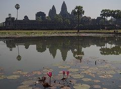 Lilies at Angkor (ORIONSM) Tags: angkorwat cambodia water lake lillies flower building temple khmer reflection asia olympus olympus14150mm omdem1