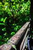 Sarawak Cultural Village (Phalinn Ooi) Tags: santubong kuching sarawak borneo malaysia asia permairainforestresort damai beach pantai sarawakculturalvillage kampungbudaya matangwildlifecentre tamannegara nationalpark kubah wetlands people portrait culture dayak wildlife animals nature outdoor adventure travel wanderlust holiday cuti jalan landmark orangutan flyinglemur proboscismonkey trekking hiking frog safari river boat photography canon eos dslr bokeh macro 5dm4 sape trump iban bidayuh wallace rainforestworldmusicfestival family son wife woman animal forest water tree sexy flora fauna food hotel local treehouse love