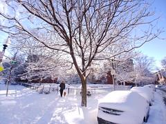 Morning after snow storm Skylar (brooksbos) Tags: animal brooksbos boston brooks southend city geotagged light landscape massachusetts newengland nature winter lgg6 lg smartphone snow fallensnow drifts morning