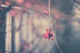 Spring everywhere