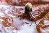 _JRB1729 (yossi rufman) Tags: snails macro d750 nikon tokina 100mm yossi rufman