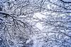 Nieve en Febrero (Momentos que no se buscan...) Tags: galicia españa spain febrero february invierno winter nieve snow naturaleza nature blanco white color frío cold canon canon450d 450d 50mm 50mmlens paisaje