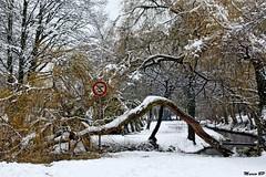 Photos Marco BP (23)_GF (marcbihanpoudec) Tags: bretagne neige plabennec plan deau lac banc arbres