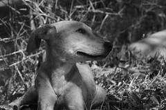 Photo00071 (KarenVázquezPhotography) Tags: pet dog eyes love look mirada cute puppy perrito cachorro can sweet feeling black white bw tierno ternura loving true mascota perro animal grayscale