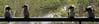 Kookaburras (iansand) Tags: lanecove kookaburra laughingkookaburra bird line