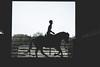 IMG_4140 (krameron) Tags: horse silhouette